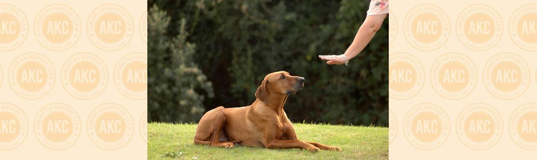 Dog trick: Rollover