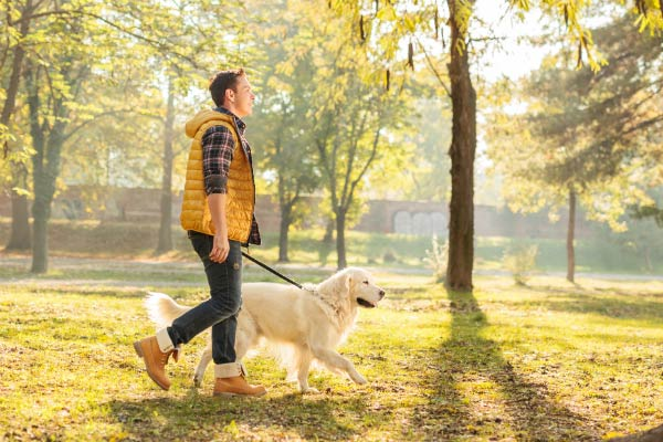 Things To Do With Your Dog In Raleigh