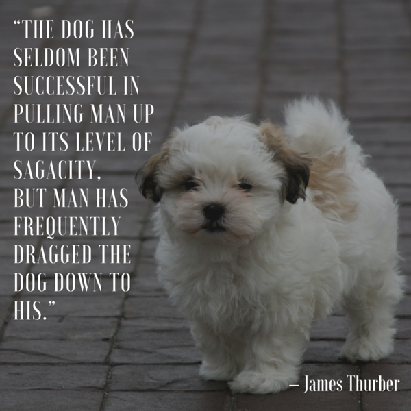 Dog Quotes — We Rounded up the Best of the Best