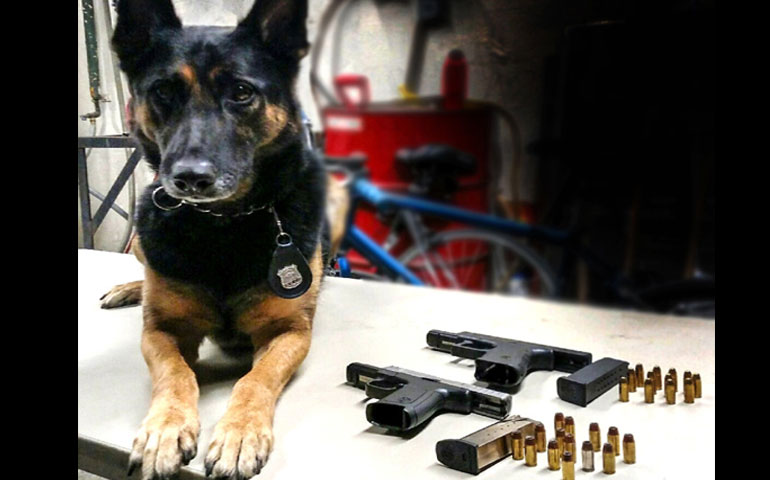 K-9 Named for Fallen Cop Finds Loaded Guns