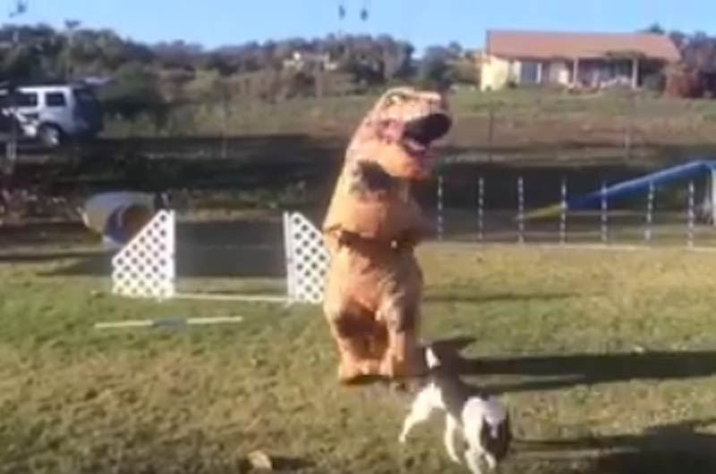 T. Rex doing agility run is hilarious