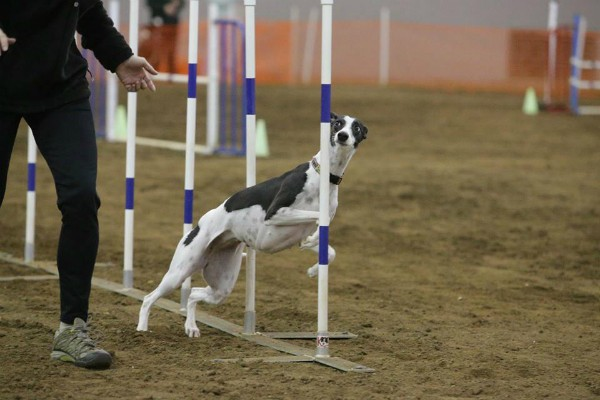 Photo: AKC Breeder of Merit Angela Bass.