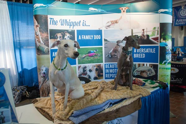 whippet meet the breeds booth
