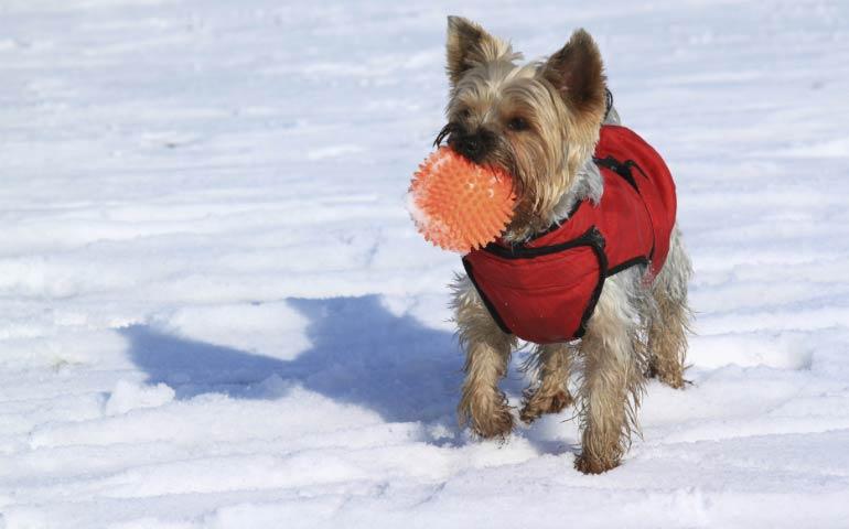winter coat dog