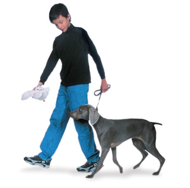 teach a dog to heel