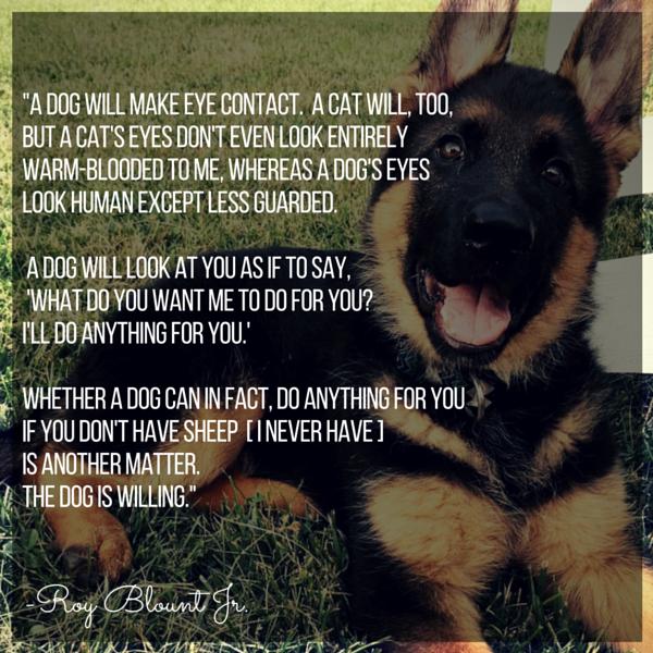 Cita de Blount Dog