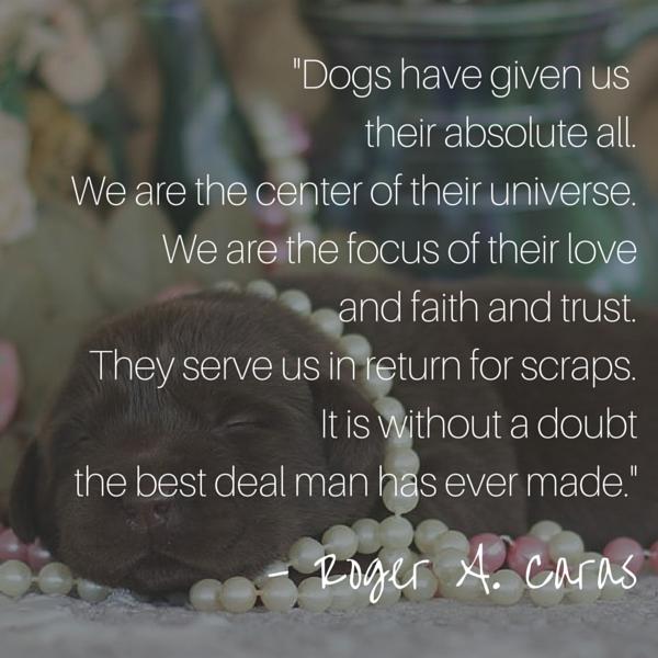 Cita del perro de Caras