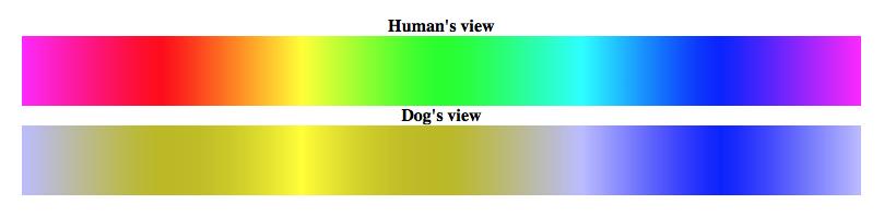 espectro de color de la visión del perro