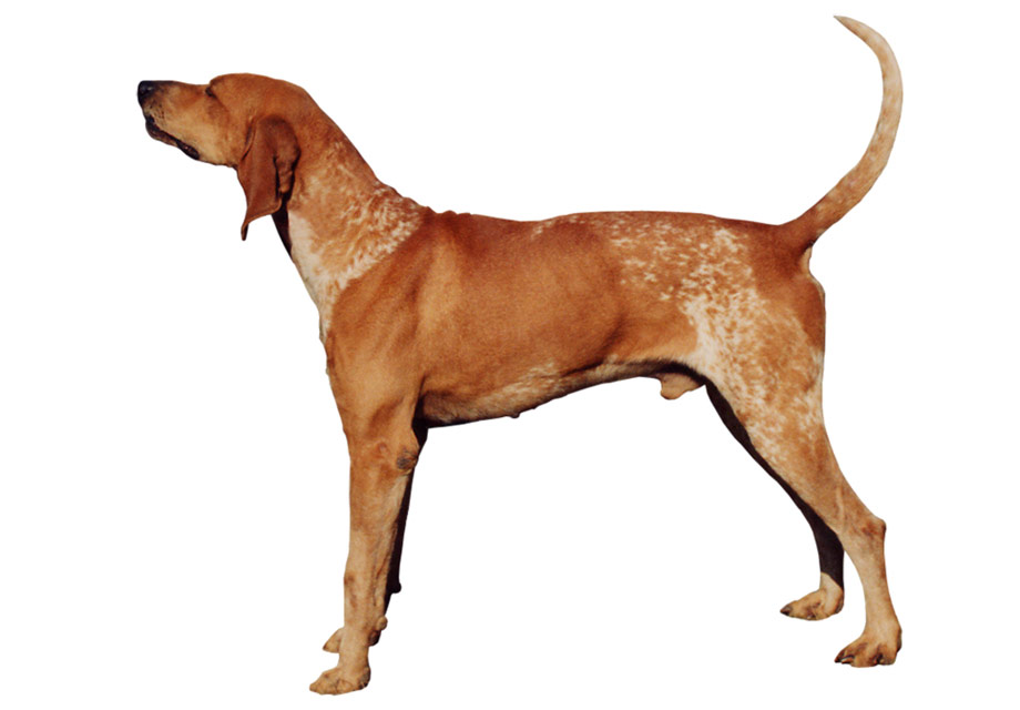 All Dog Breeds With Pictures And Information