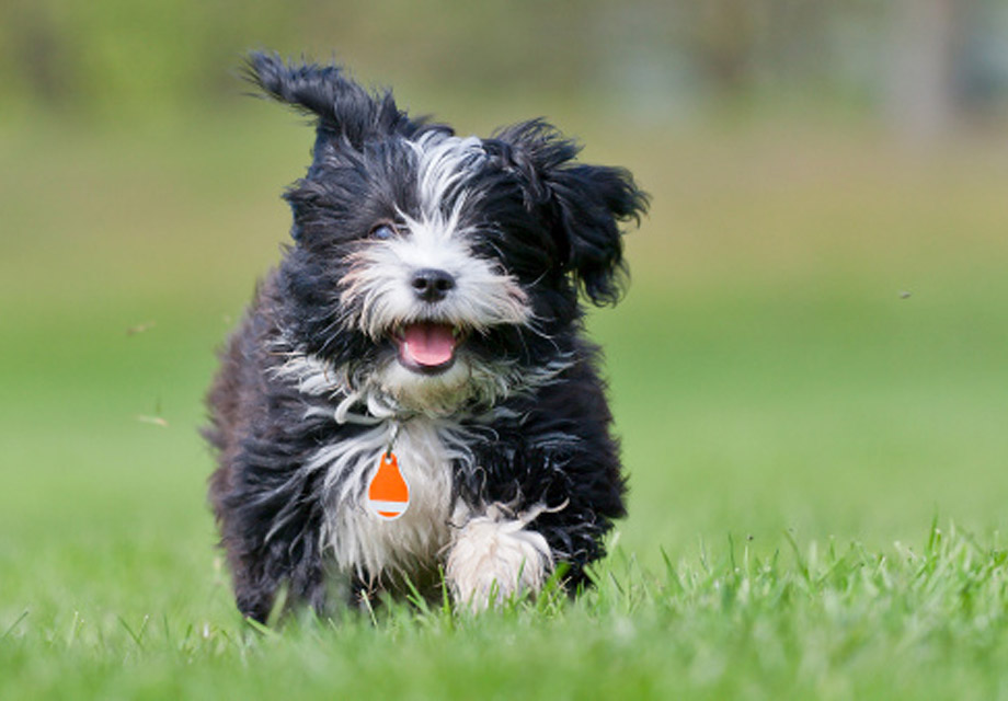 Small Dog Breed Puppies