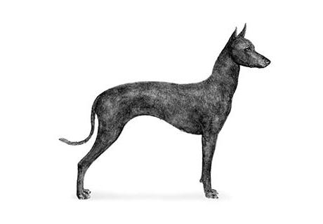Dog Training Events