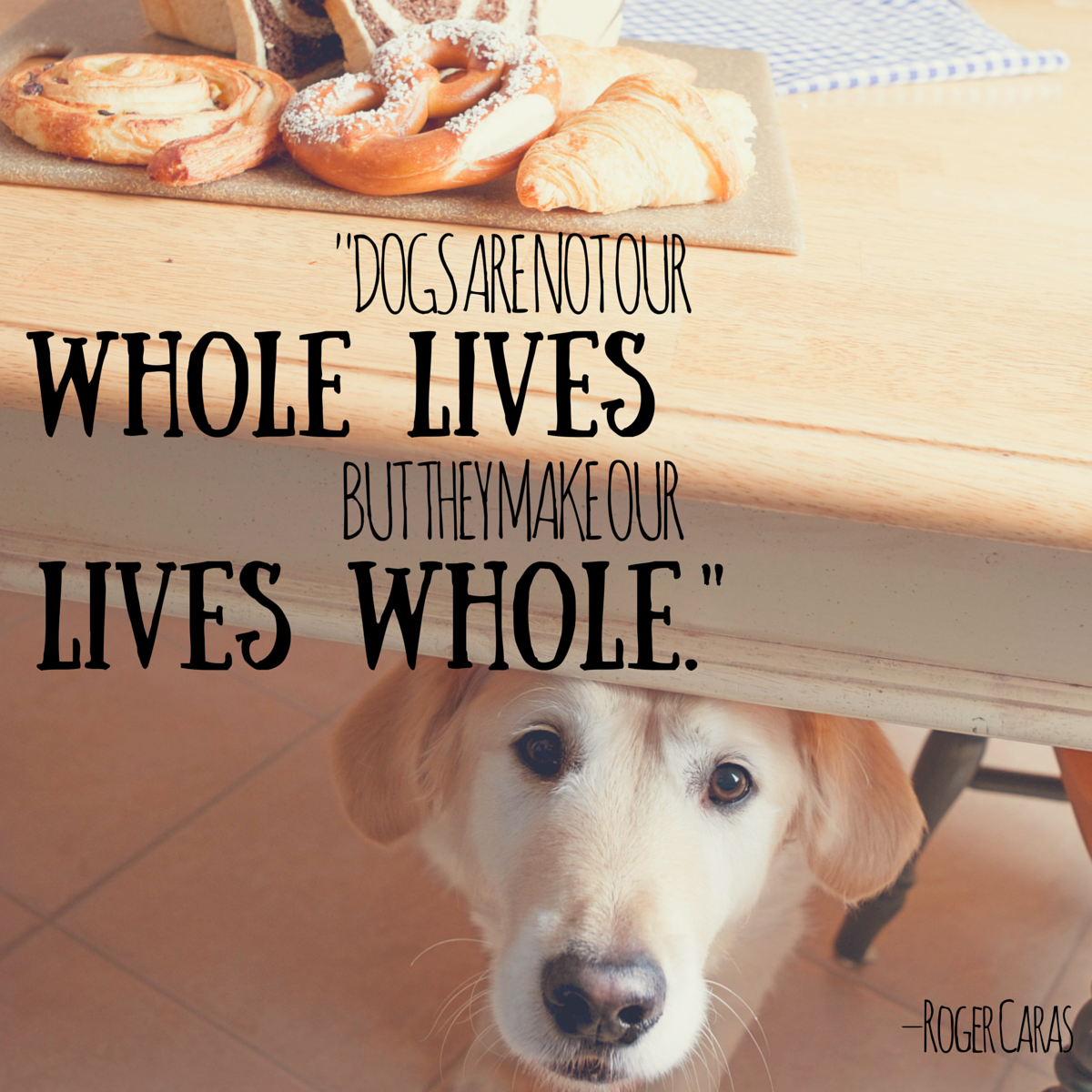 Dog Quotes Dog Quotes — We Rounded up the Best of the Best Dog Quotes