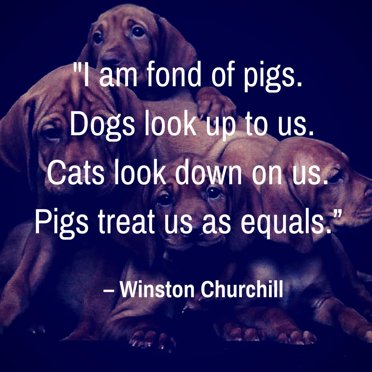 cita de perro churchill