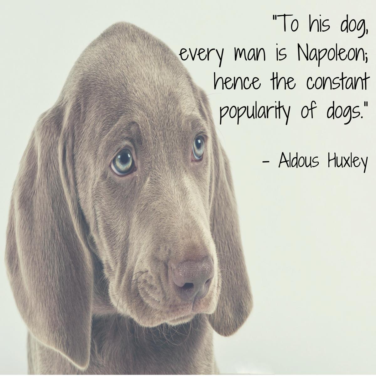 cita de perro huxley
