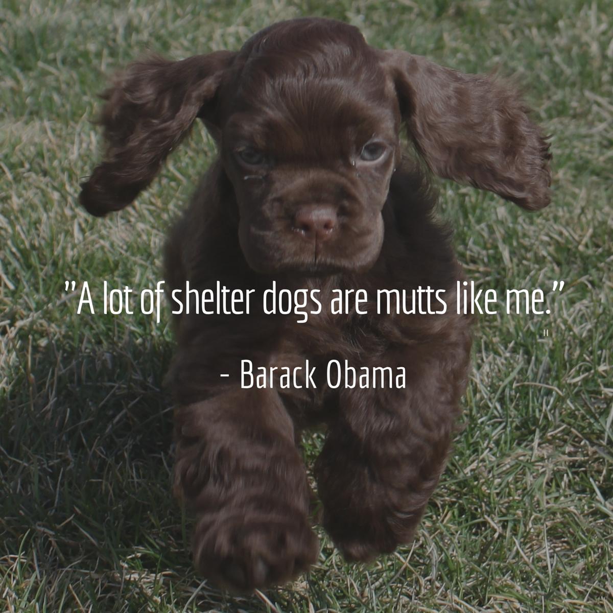 cita de perro obama
