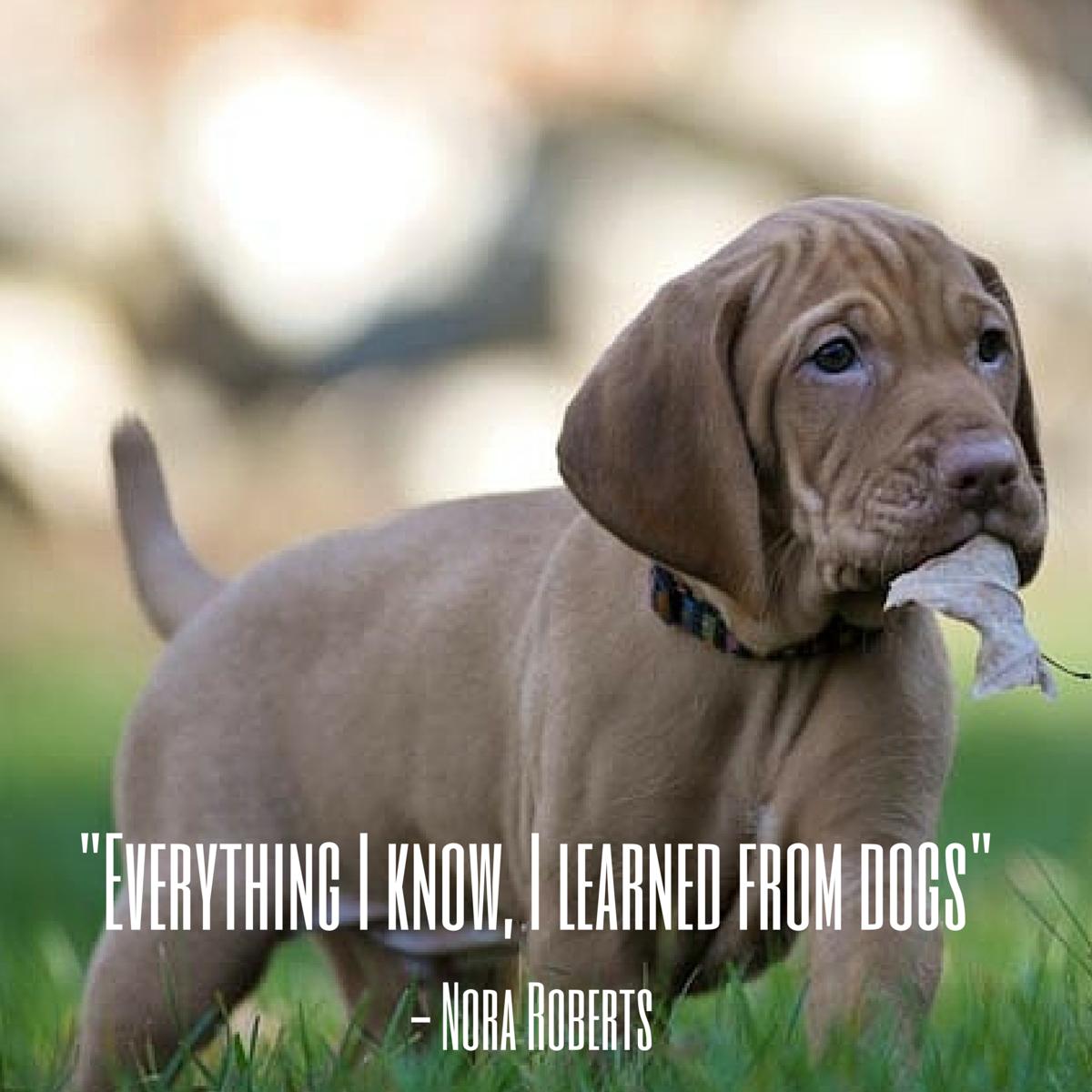 cita de perro roberts