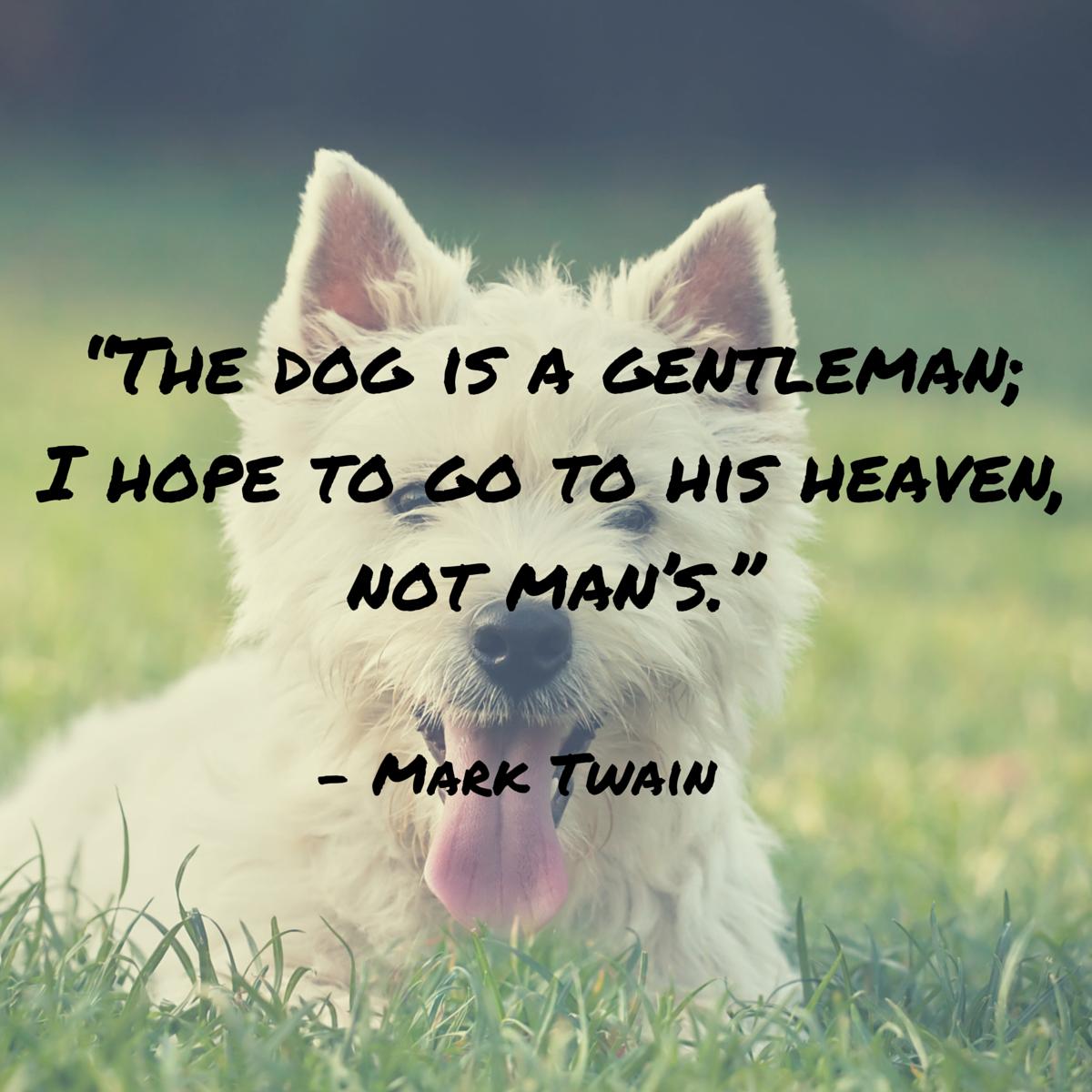 cita de perro twain