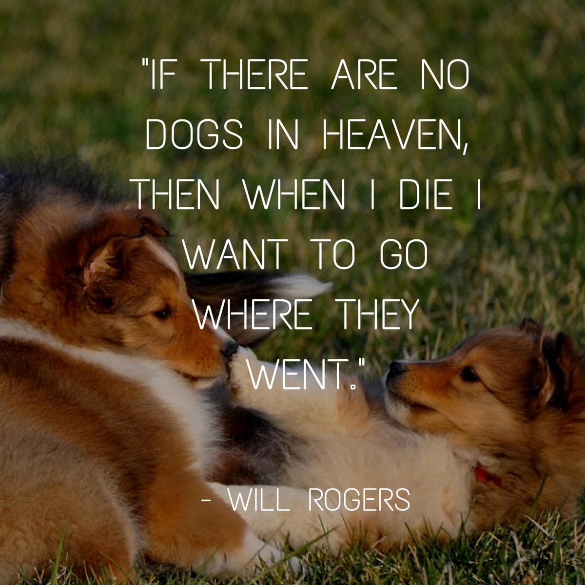 cita de perro rogers