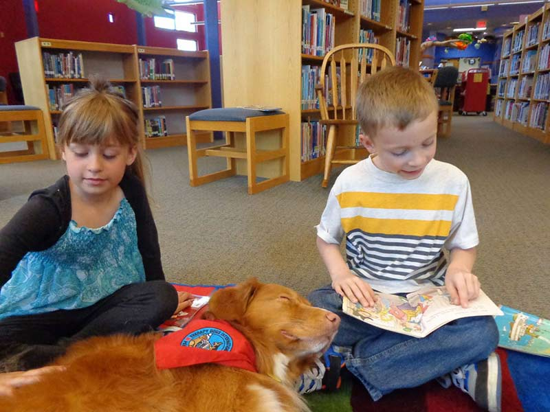 Perro perdiguero de peaje de pato Baxter Therapy Dog