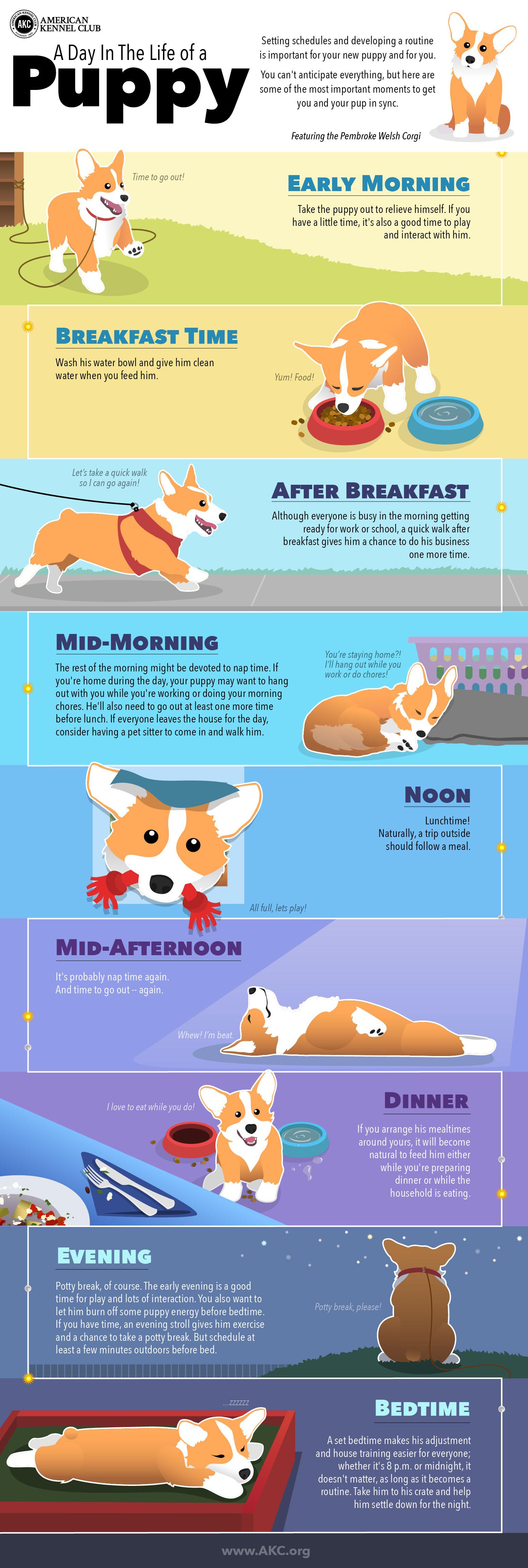 infografía de horarios de cachorros