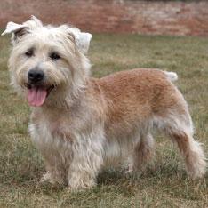 Terrier Group - American Kennel Club