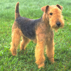 Terrier Group American Kennel Club