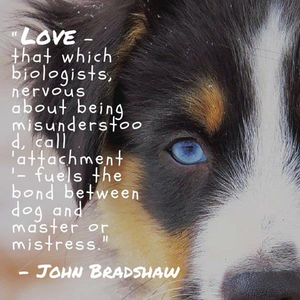 Cita del perro Bradshaw