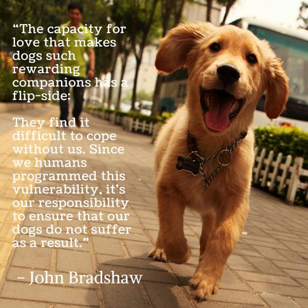 Citas del perro Bradshaw