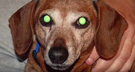 ojo de perro espeluznante