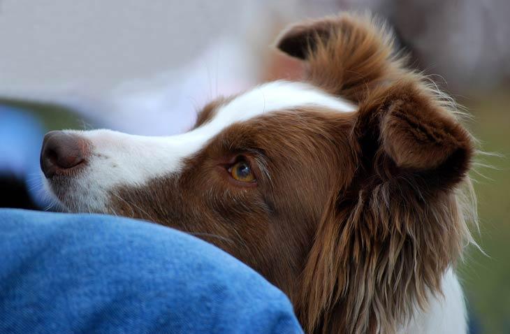 el perro mantiene contacto visual