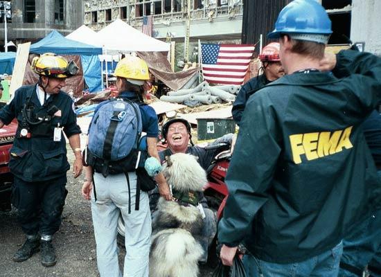 Tikva, uno de los perros de rescate del 11 de septiembre