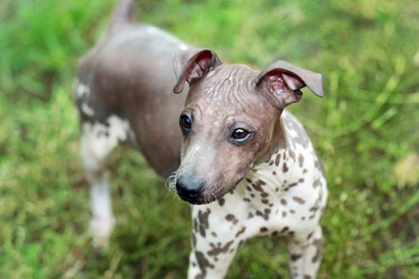 [aht cute puppies]