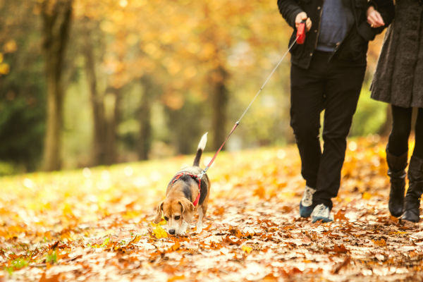 Dog Walking Tips: How to Walk Your Dog