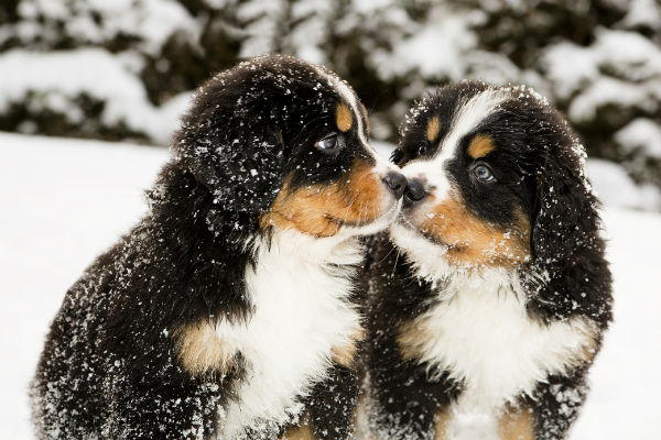 [bmd cute puppies]