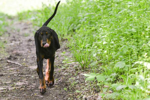 6 Ways Your Yard Can Harm Dog