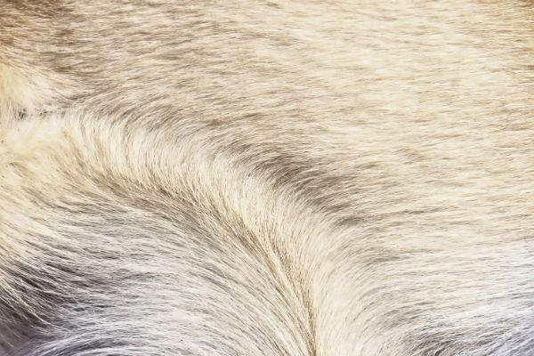 dog_fur_body_image