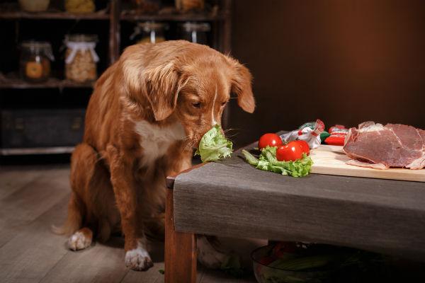 verduras para perros
