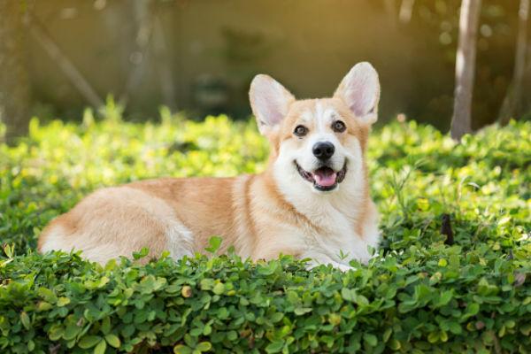 pwc dog Fotografías