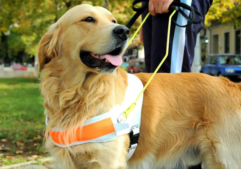 Αποτέλεσμα εικόνας για guide dog