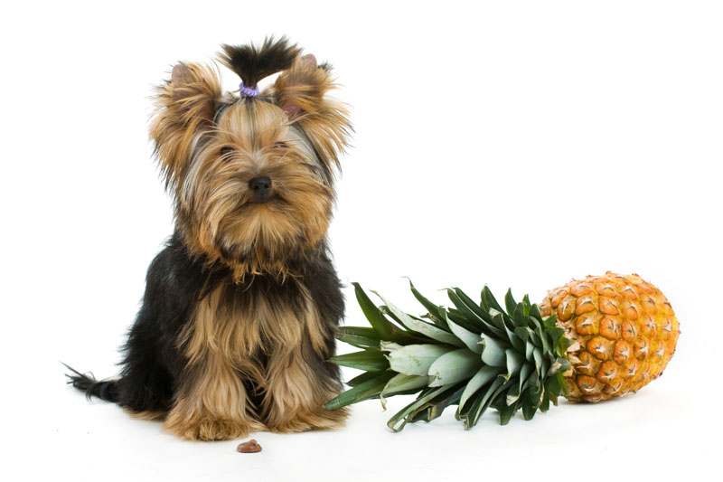 dog and pineapple header