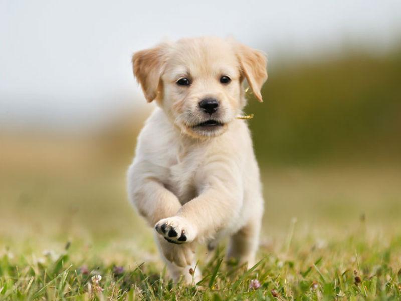 Super Cute Pupper