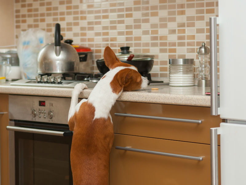 The 10 Human Medications Most Dangerous to Dogs – American