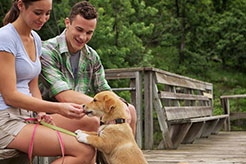 Puppy Socialization: Why, When, and How to Do It Right - thumbnail