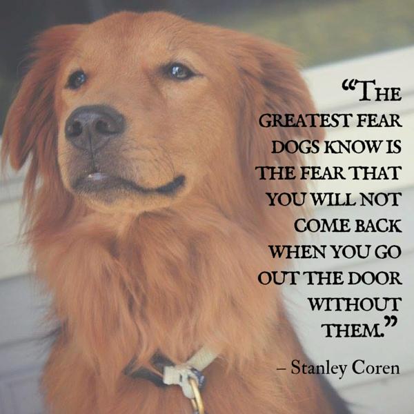 Cita de perro coren