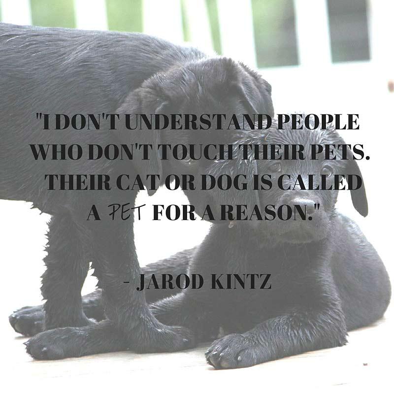 Cita de Kintz