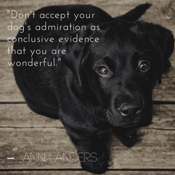 Cita del perro de Ann Landers