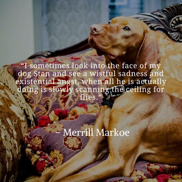 Frases del perro Markoe
