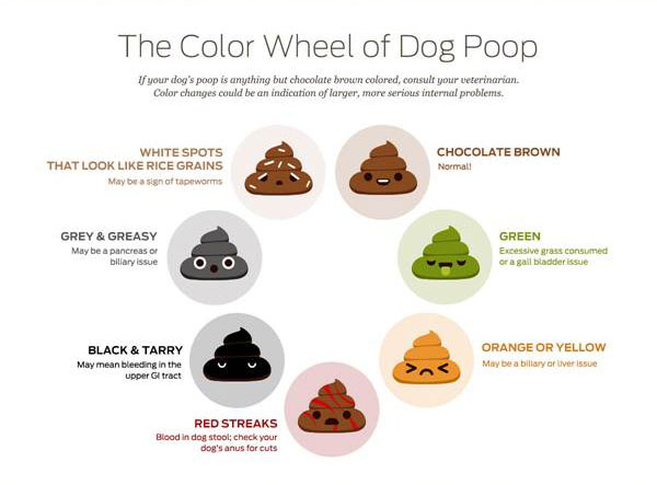 How To Tell If Your Dog S Poop Is Healthy American Kennel Club