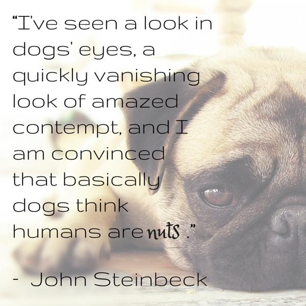 Cita del perro Steinbeck