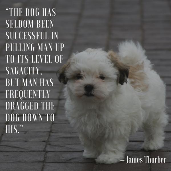 Cita del perro de James Thurber